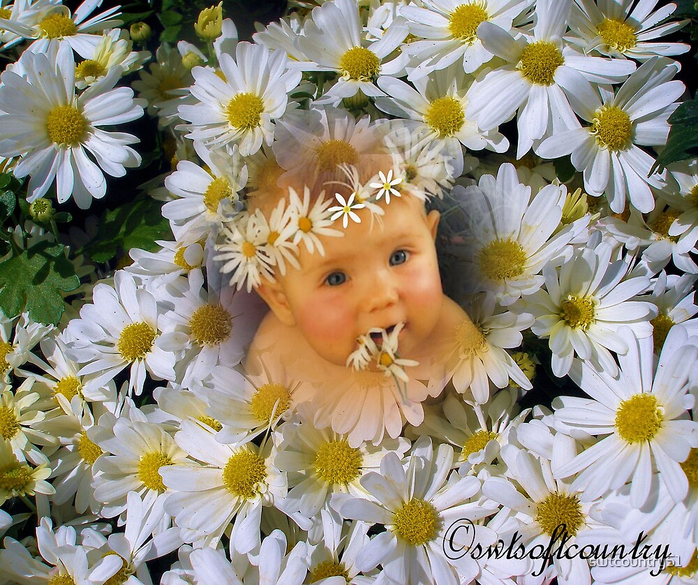Baby Daisy by swtcountry51