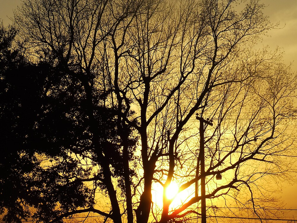 Sunset In The Tree by wldman68