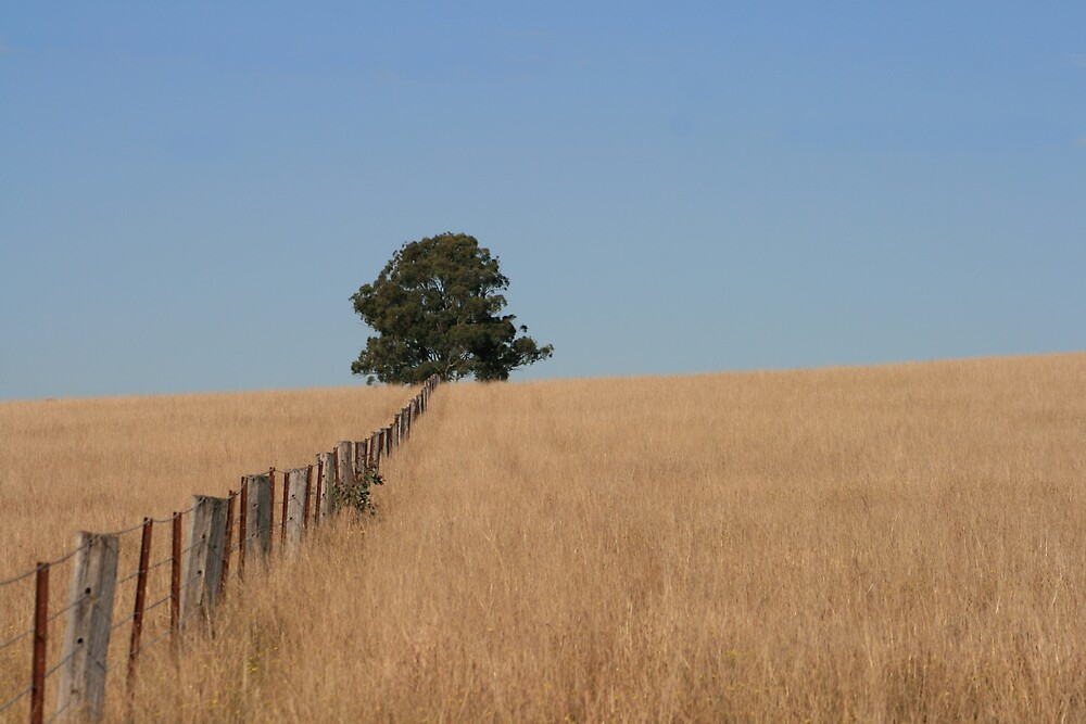 Fence to.... by jPhillips