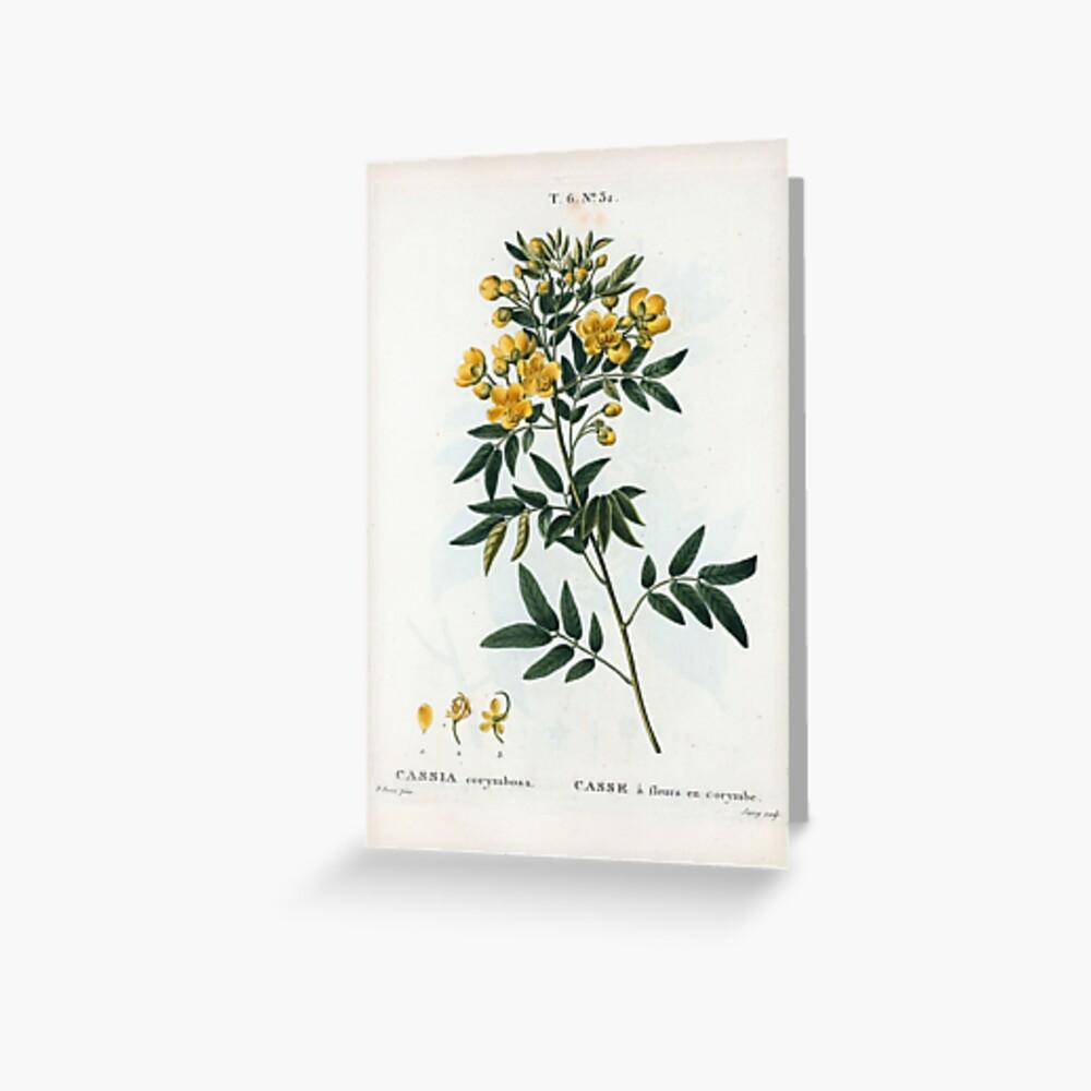 Traité des Arbres et Arbustes 0054 Cassia corymbosa Casse à fleurs en corymbe Greeting Card