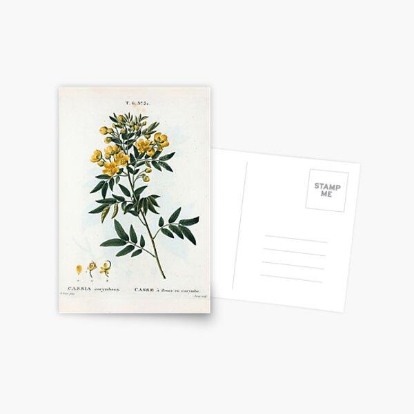 Traité des Arbres et Arbustes 0054 Cassia corymbosa Casse à fleurs en corymbe Postcard