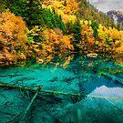 Autumn in Five-flower Lake, Jiuzhaigou (036)  by Daniel H Chui
