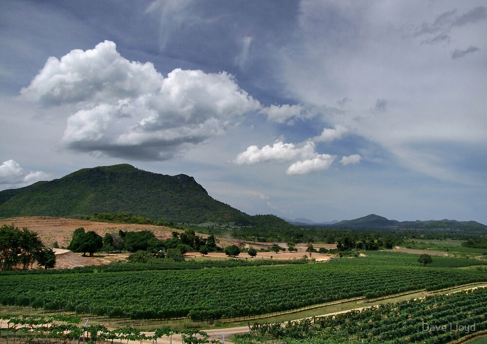 Hua Hin Hills Vineyard by Dave Lloyd