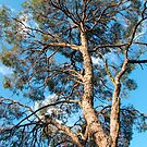 Yard Tree by Catherine Davis