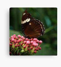 Butterfly III Canvas Print