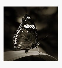 Butterfly V Photographic Print