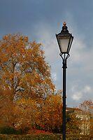 Autumn light. by Tony Reed