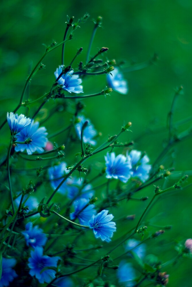 Blue Dream by apoklistika