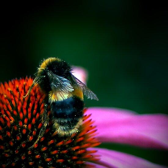 Buzz III by Didi Bingham