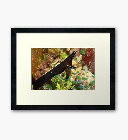 Black Ribbon Framed Print