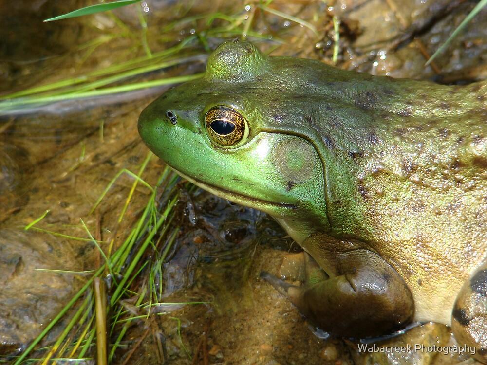 Frog 2 by Jocelyne Phillips
