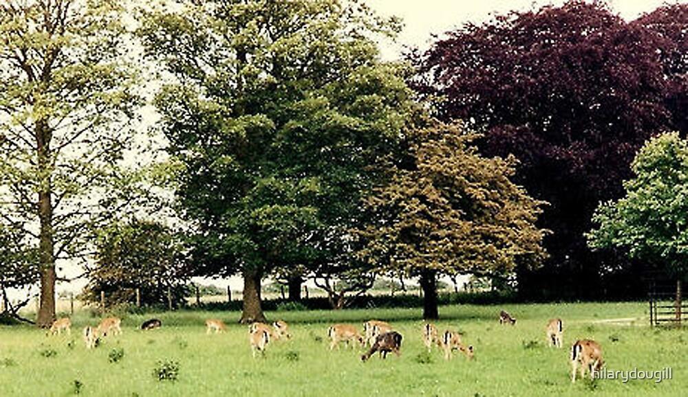 Where Deer may safely graze by hilarydougill
