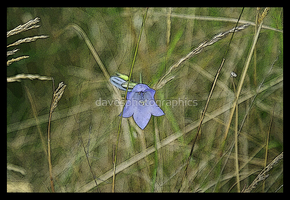 Bluebell Paint Effect by davesphotographics