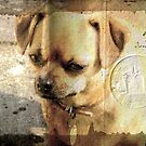 Dog. by Forfarlass