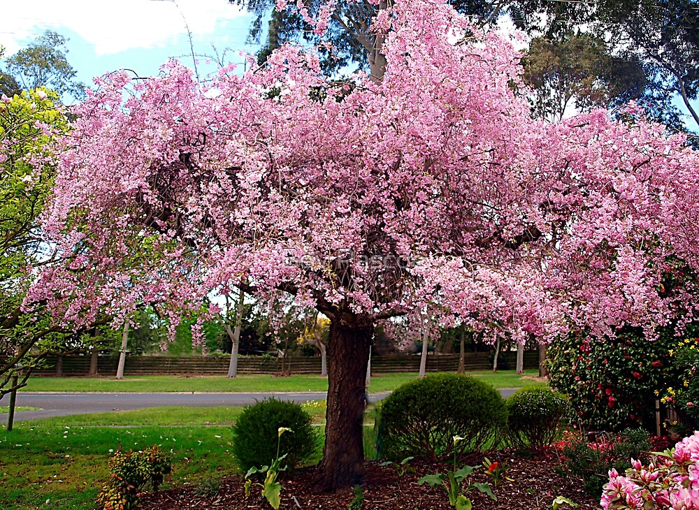Spring Blossom of Pink by Bev Pascoe