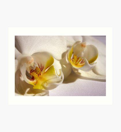 Orchid 3 Art Print