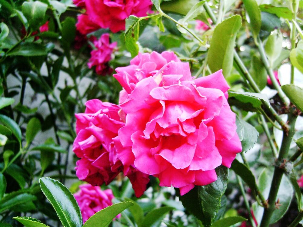 pink flower by Taiten