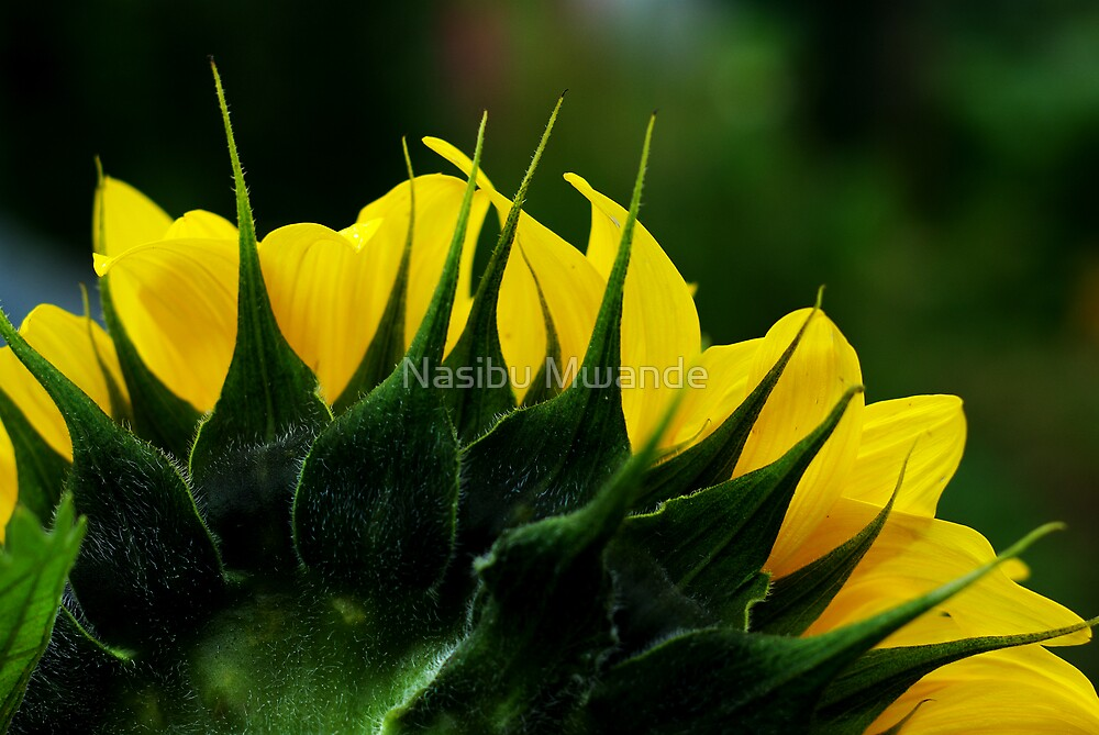 Yellow and Green by Nasibu Mwande