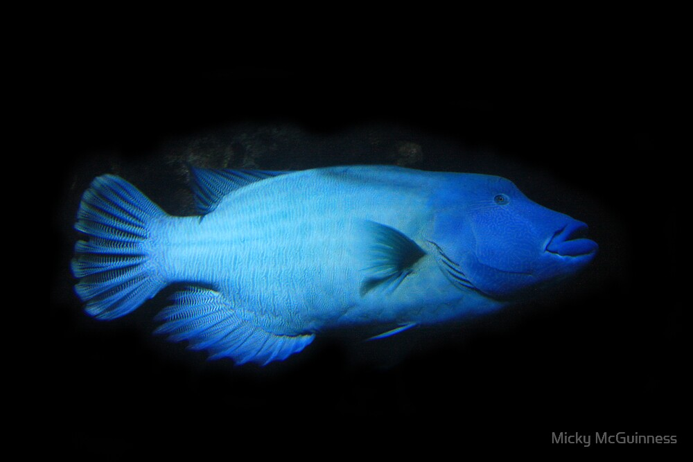 Deep Blue Fish by Micky McGuinness