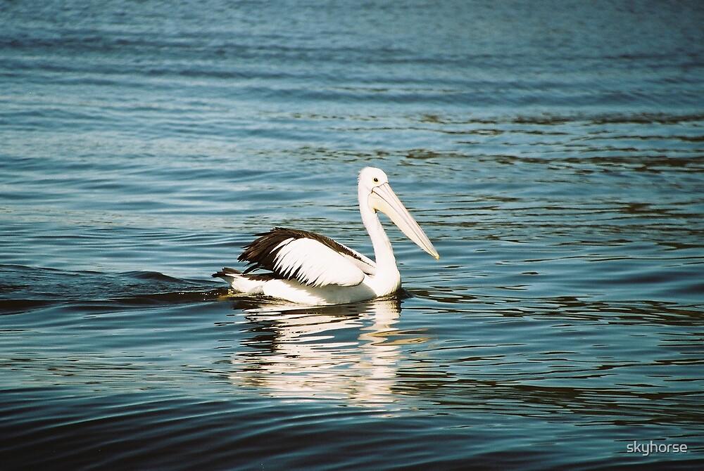 Swan River Pelican by skyhorse