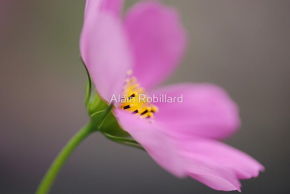 pretty and pink by Alain Robillard
