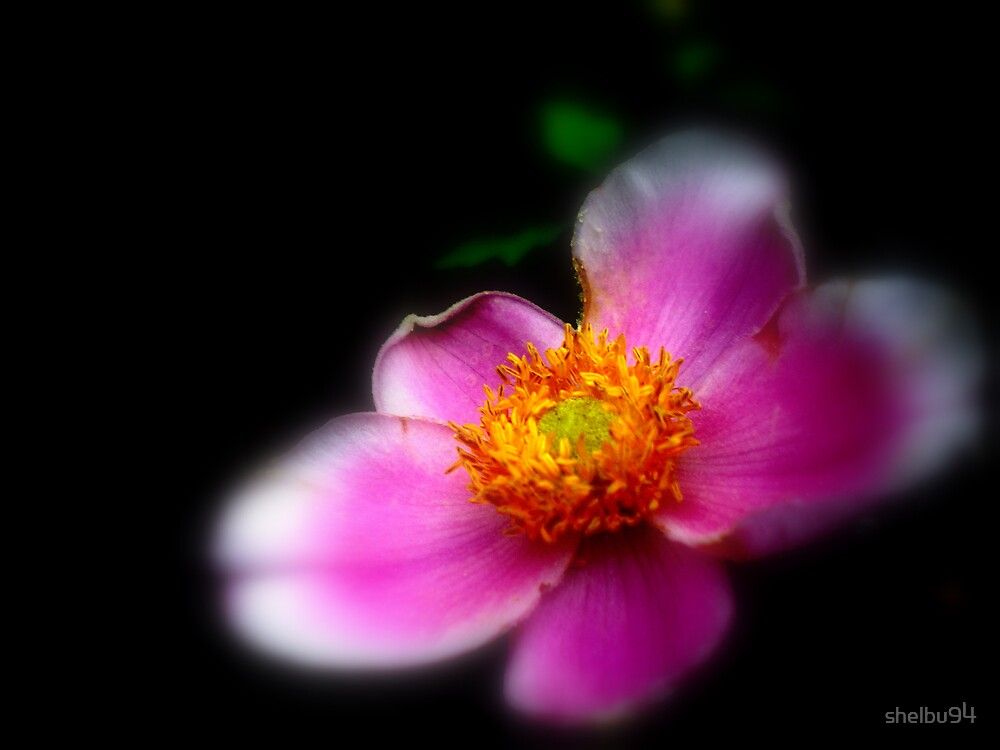 Soft Pink by shelbu94