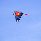 Freebird by wahboasti