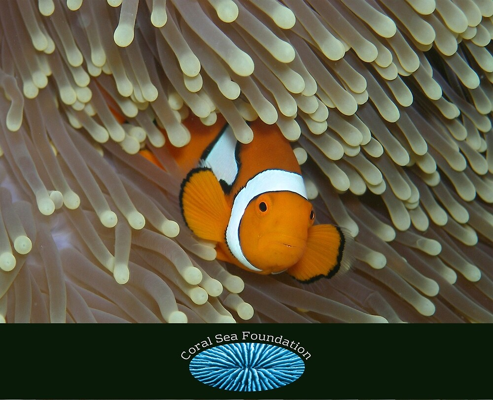 Nemo with logo by Reef Ecoimages
