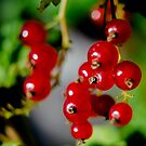 Autumn taste by Yana Art
