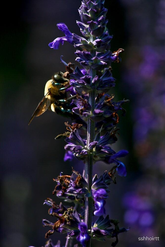 Bee On Flower by sshhoirtt