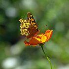 Nectar from the Sun by kibishipaul