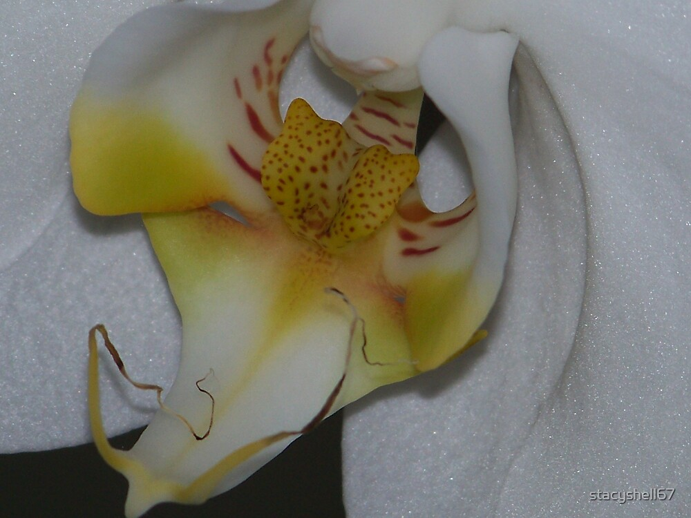 White Orchid by stacyshell67