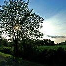 Sun tree by Corey Williams