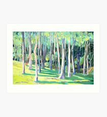 Trees at  Beechmont Lookout Art Print
