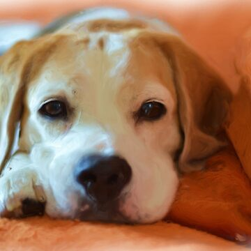 Beagle Puppy Portrait by EdmondHoggeJr