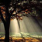 Yarra Ranges Sunrays by Ern Mainka