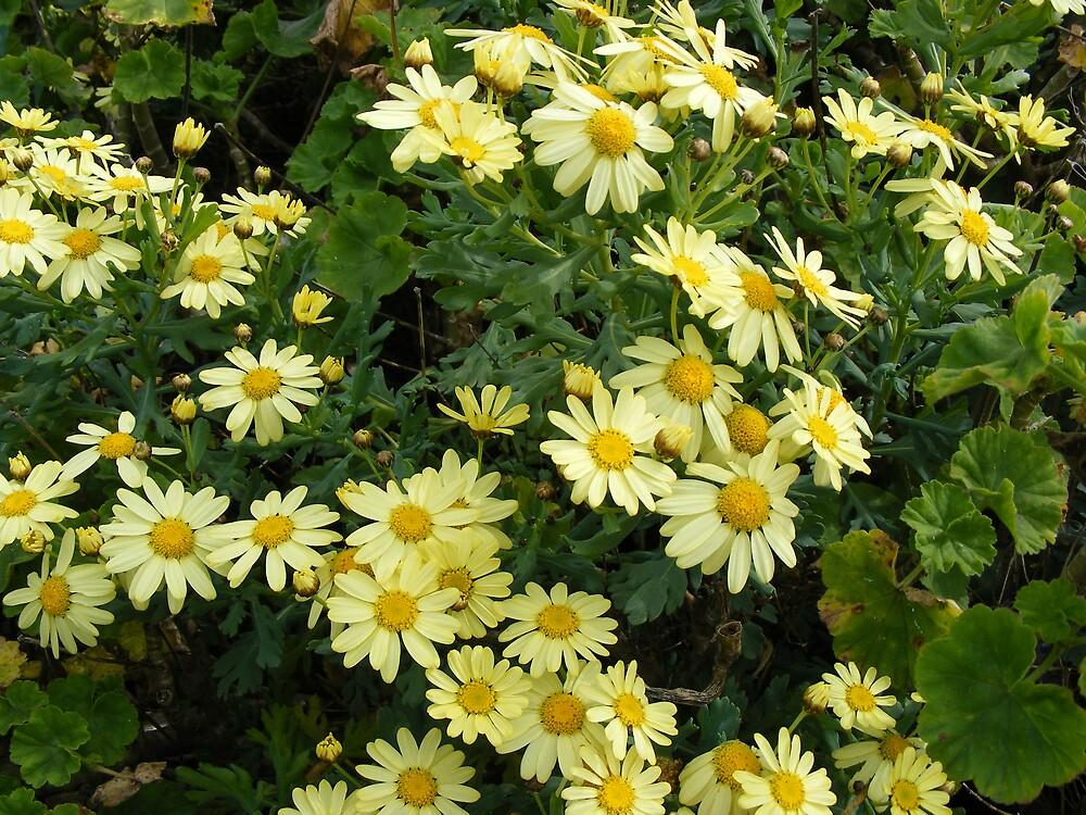 lemony glowing daisies by gaylene