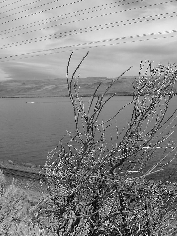 Columbia River by heathernicole00