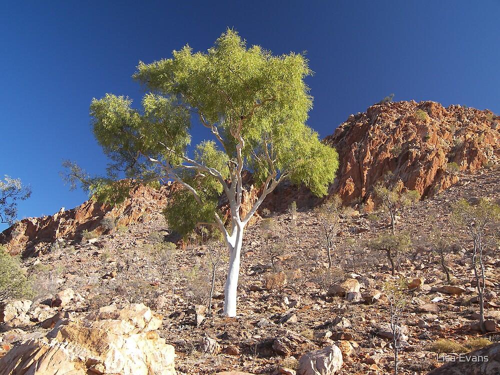 Ilparpa Rangers. Alice Springs by Lisa Evans