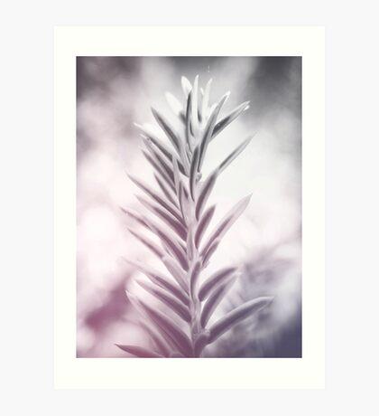 photo leafs #photography #botanical Art Print