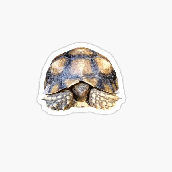 Sulcata Tortoise Sticker
