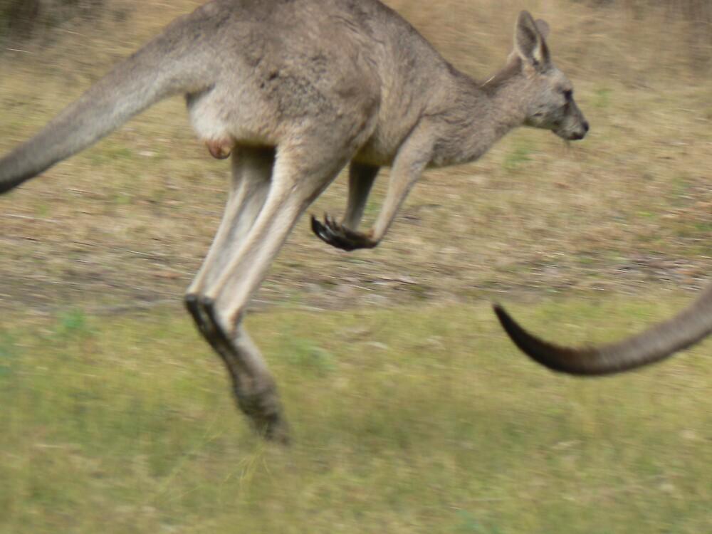 Hopping Kangaroo  by David Bass