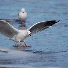 Safe Landing by Barbara Caffell