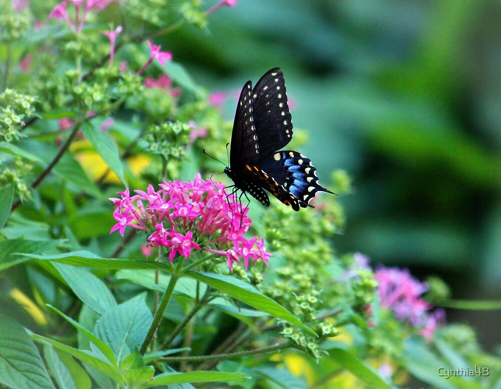 Butterfly On Pentas Flower by Cynthia48