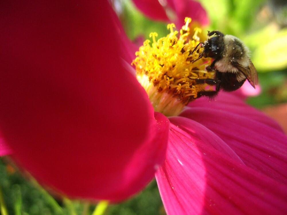 Hungry Bee by junebug076