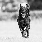 Run like there's no tomorrow by Karen Havenaar