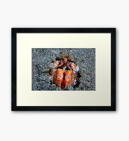 Mantis Mischief Framed Print