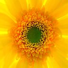 Staring At The Sun II by Damienne Bingham