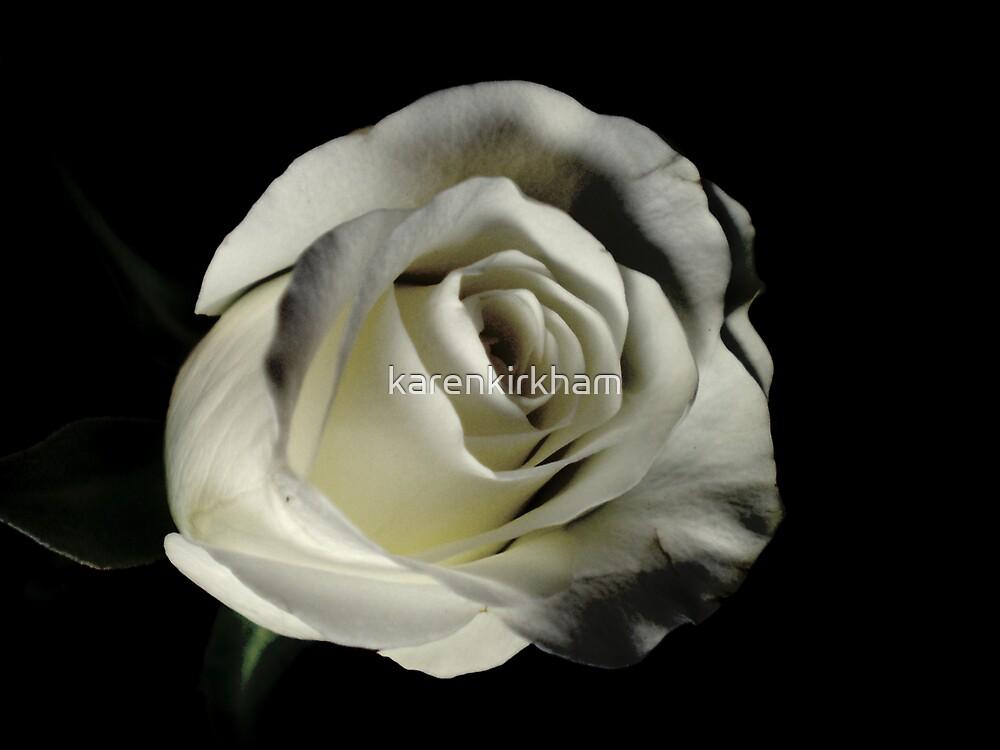 White Tea Rose 3 by karenkirkham