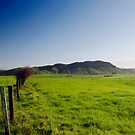 New Zealand Countryside by llemmacs